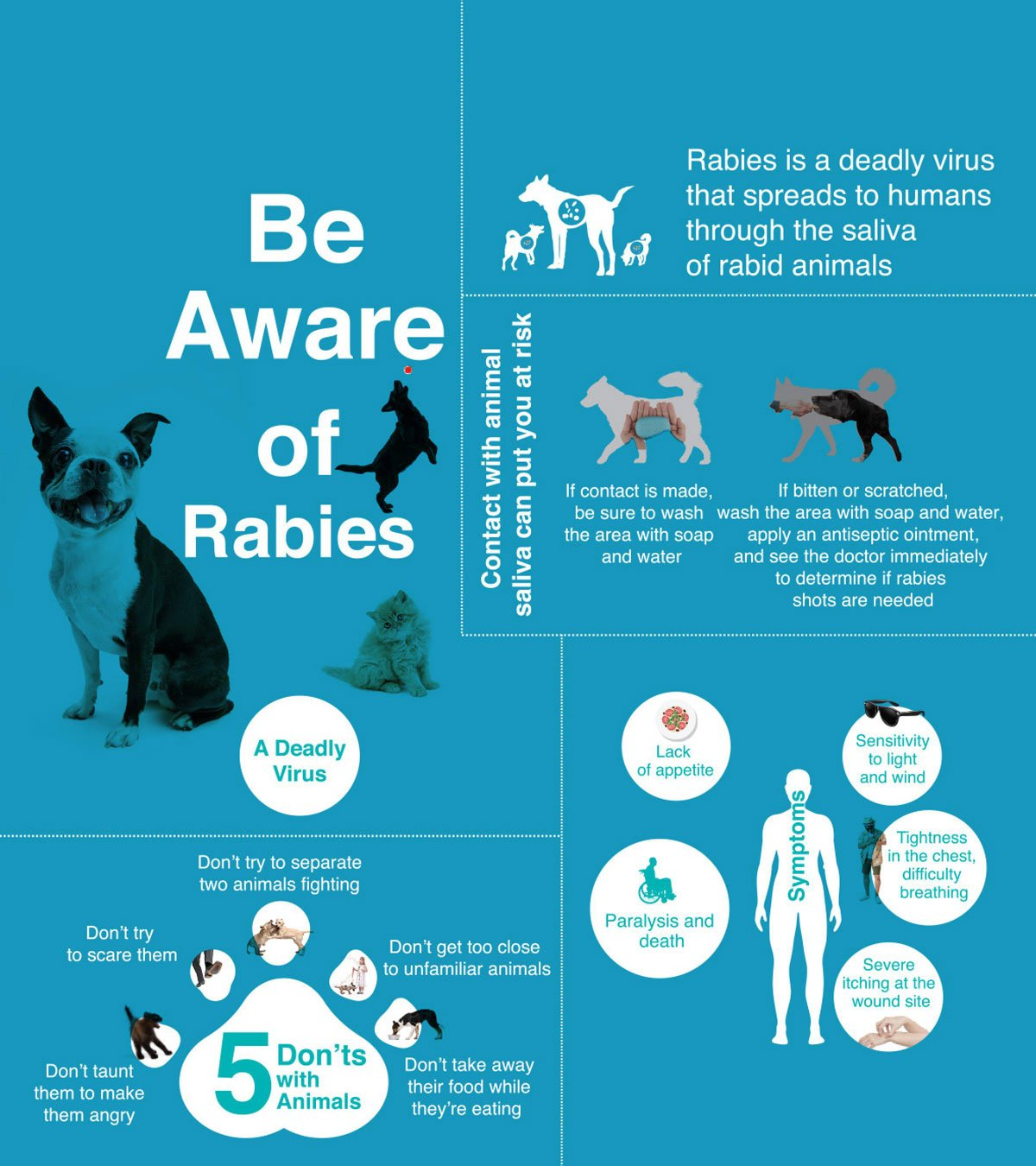 Rabies Symptoms Treatments situation bangkok thailand vaccines