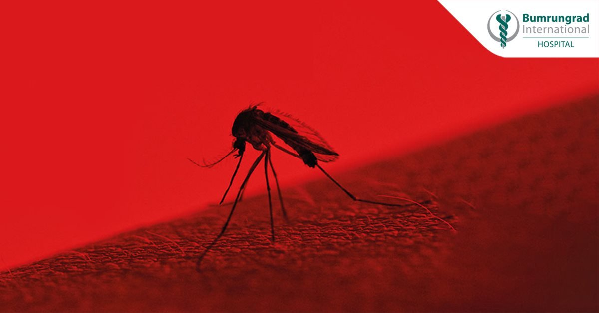Stay safe against Thailand's mosquitoes | Bumrungrad Hospital