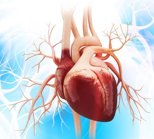 10-Incredible-Facts-about-the-Human-Heart-500-450-(2).jpg