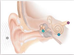 การได้ยินมีกระบวนการอย่างไร หูตึง หูดับ