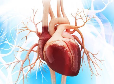 10 Incredible Facts about the Human Heart